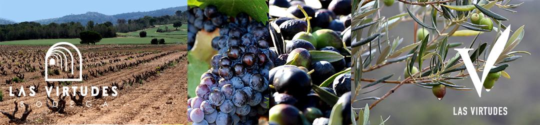 Vinos-Mediterraneos-Virtudes