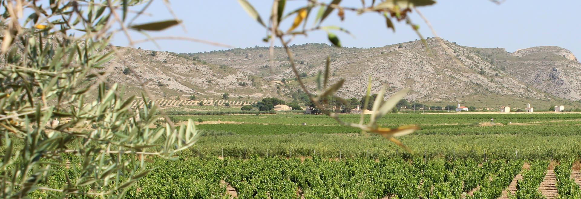 Tesoro del Mediterráneo El Proyecto