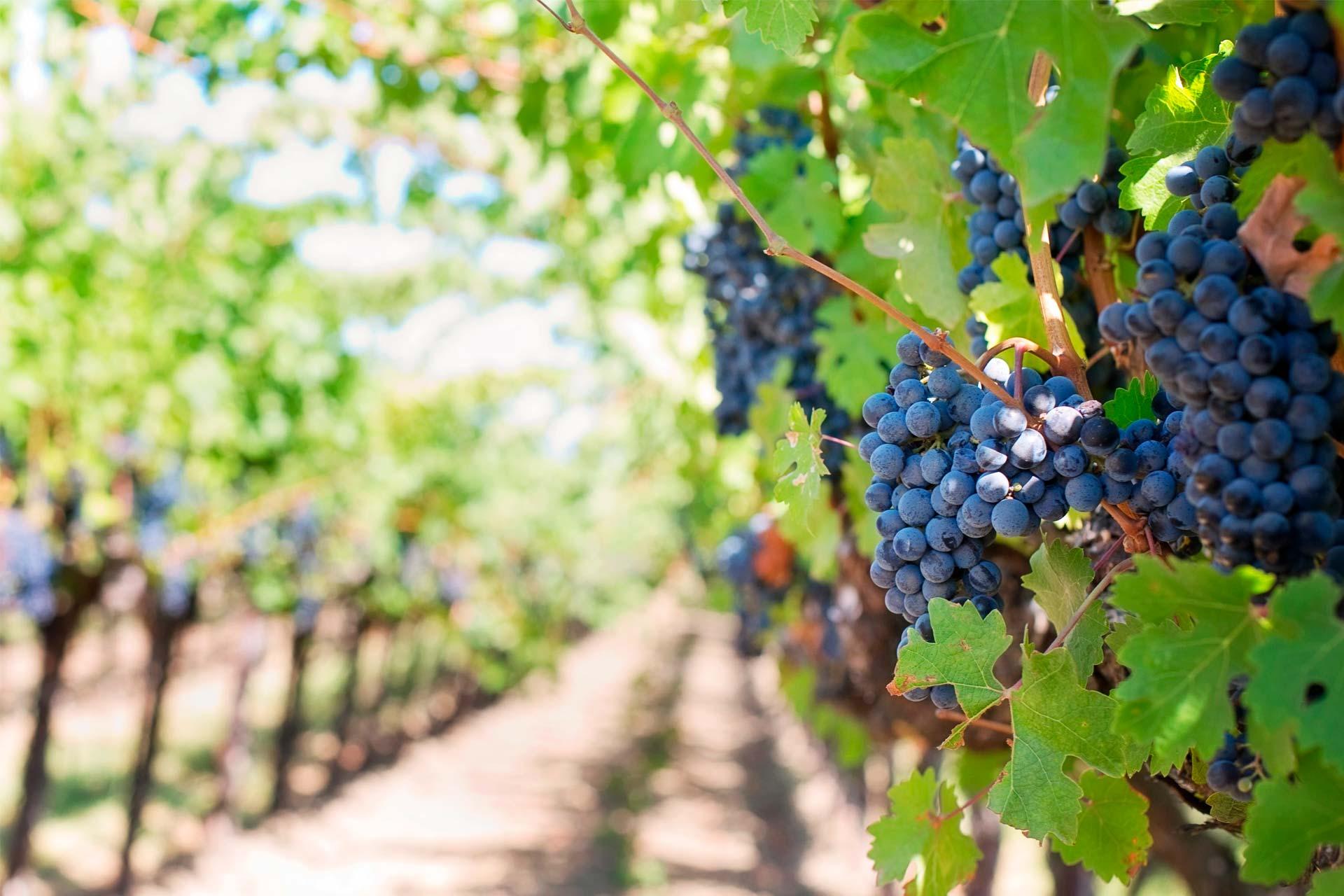 ¿Qué es un vino vegano?