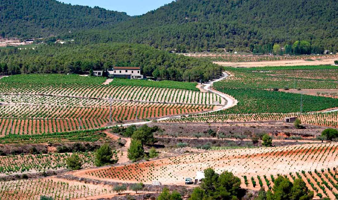 Campo de viñas Bodegas Lavia