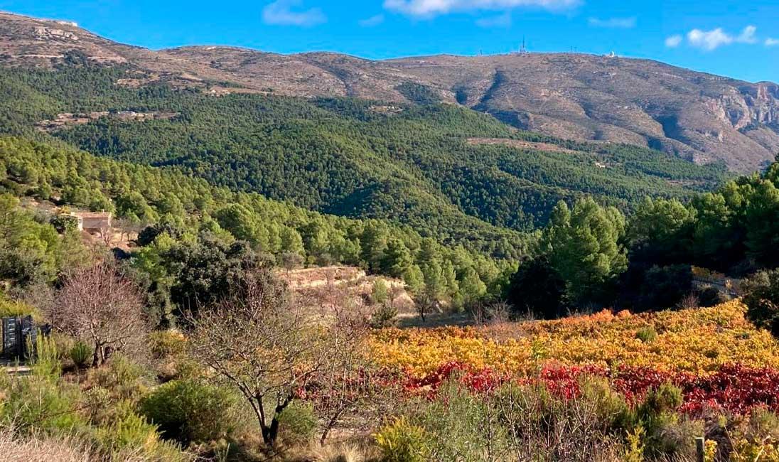 Campo de olivos Mas de Sella